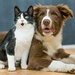 Dog/cat